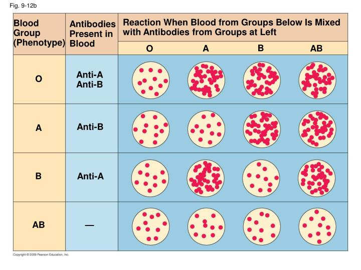 Reaction When Blood from Groups Below Is Mixed