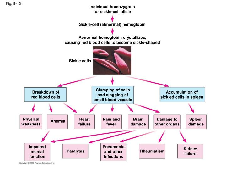 Individual homozygous