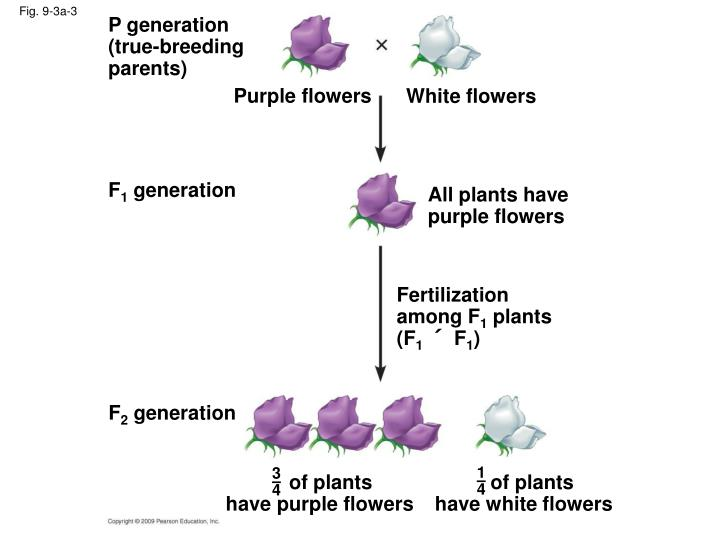 P generation