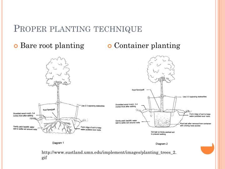 Proper planting technique