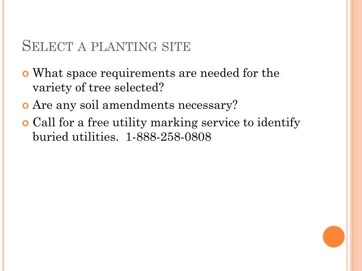 Select a planting site
