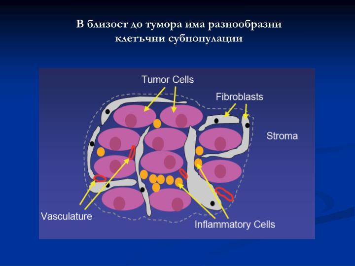 В близост до тумора има разнообразни клетъчни субпопулации