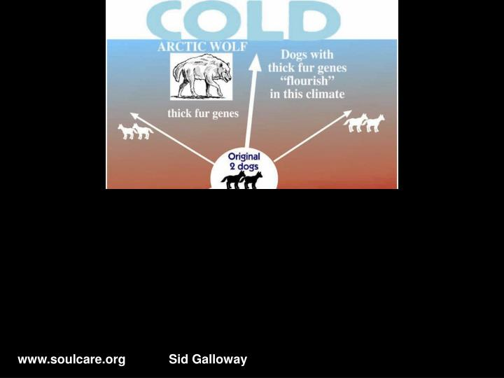 Dogs – Natural Selection Cold/Hot