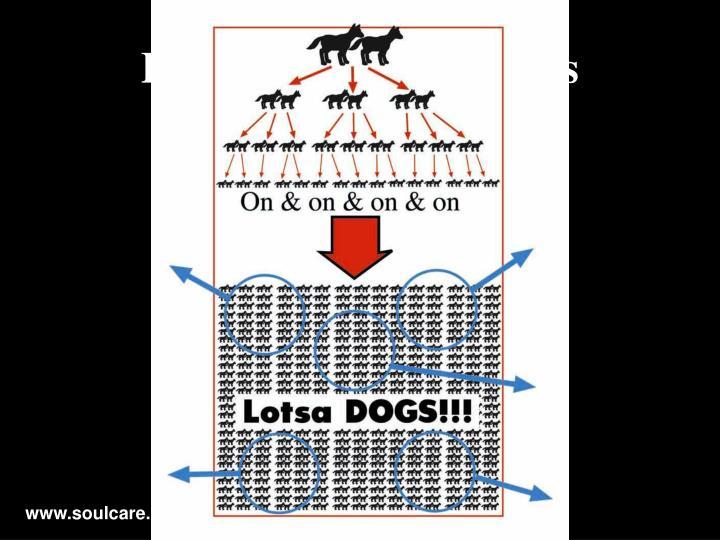 Lotsa Dogs!!! W/circles