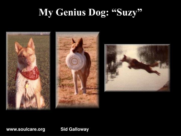 "My Genius Dog: ""Suzy"""