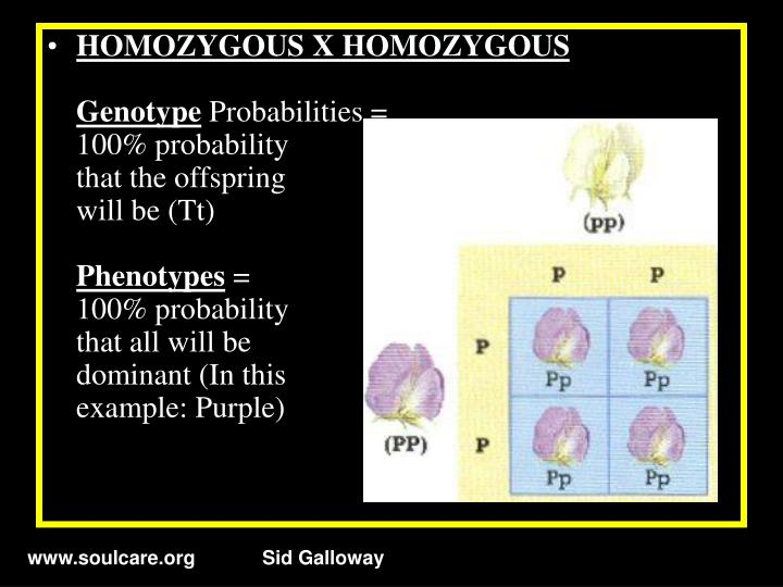 HOMOZYGOUS X HOMOZYGOUS