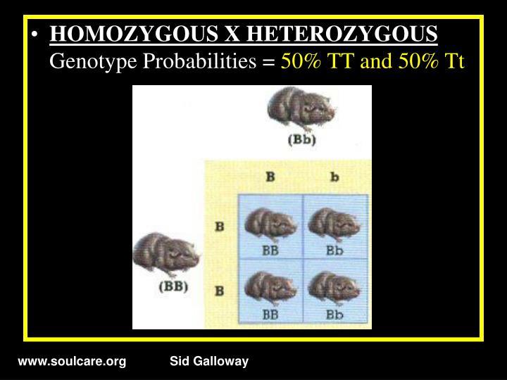 HOMOZYGOUS X HETEROZYGOUS