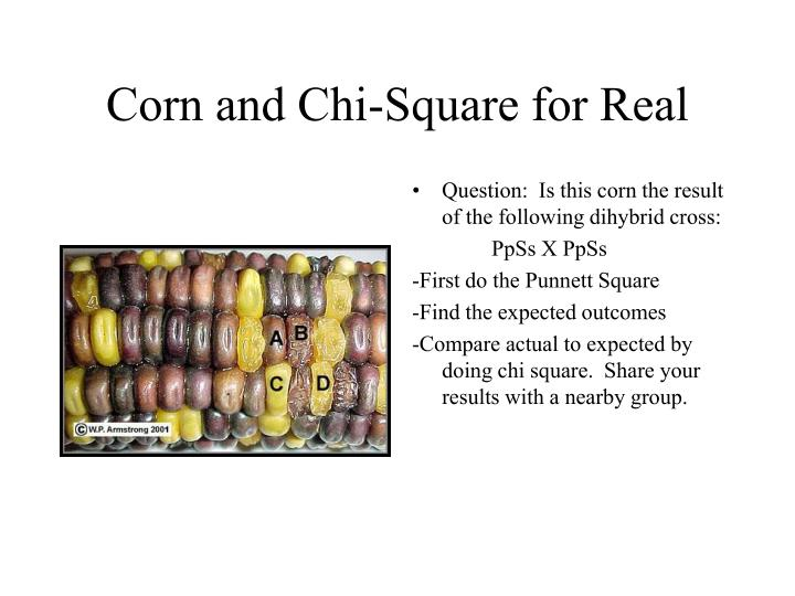 Corn and Chi-Square for Real
