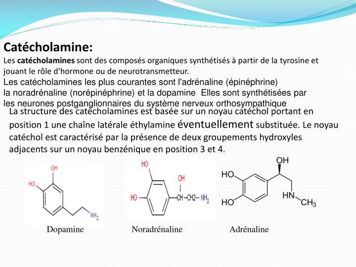 Catécholamine:
