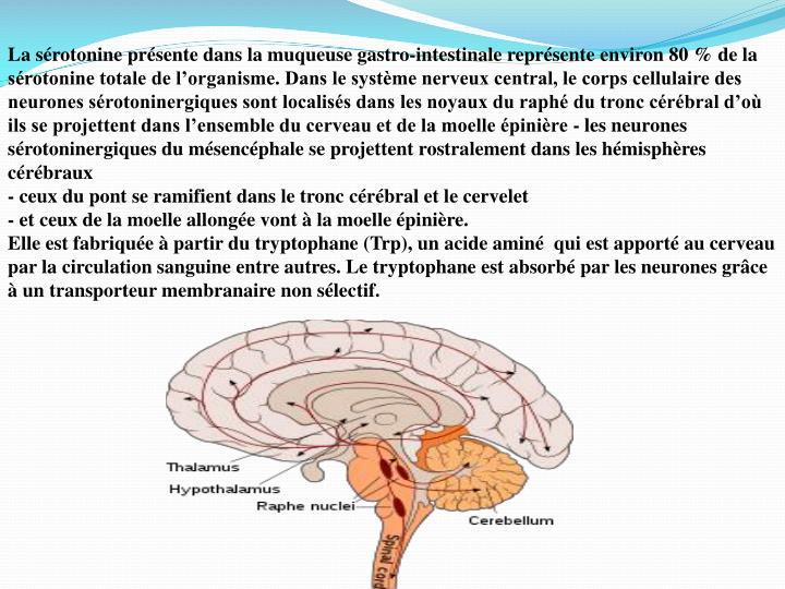 La sérotonine présente dans la muqueuse gastro-intestinale représente environ 80 % de la sérotonine totale de l'organisme. Dans le système nerveux central, le corps cellulaire des neurones sérotoninergiques sont localisés dans les noyaux du raphé du tronc cérébral d'où ils se projettent dans l'ensemble du cerveau et de la moelle épinière - les neurones sérotoninergiques du mésencéphale se projettent rostralement dans les hémisphères cérébraux