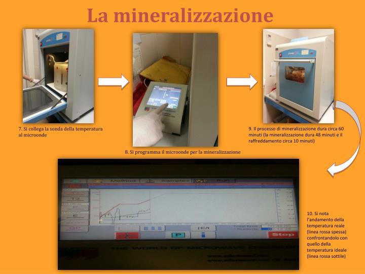 La mineralizzazione