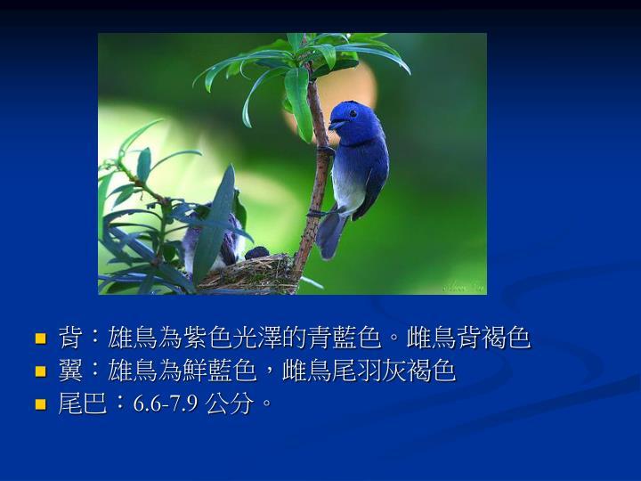 背:雄鳥為紫色光澤的青藍色。雌鳥背褐色