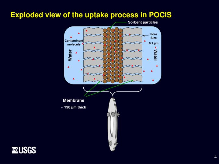 Exploded view of the uptake process in POCIS