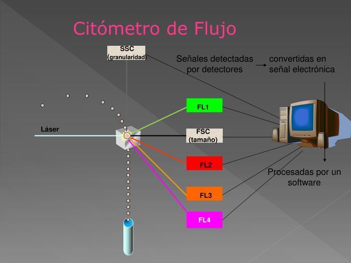 Citómetro de Flujo