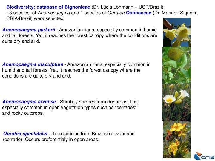 Biodiversity: database of Bignonieae