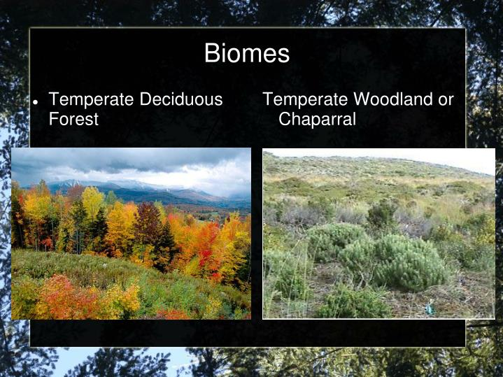 Temperate Woodland or Chaparral