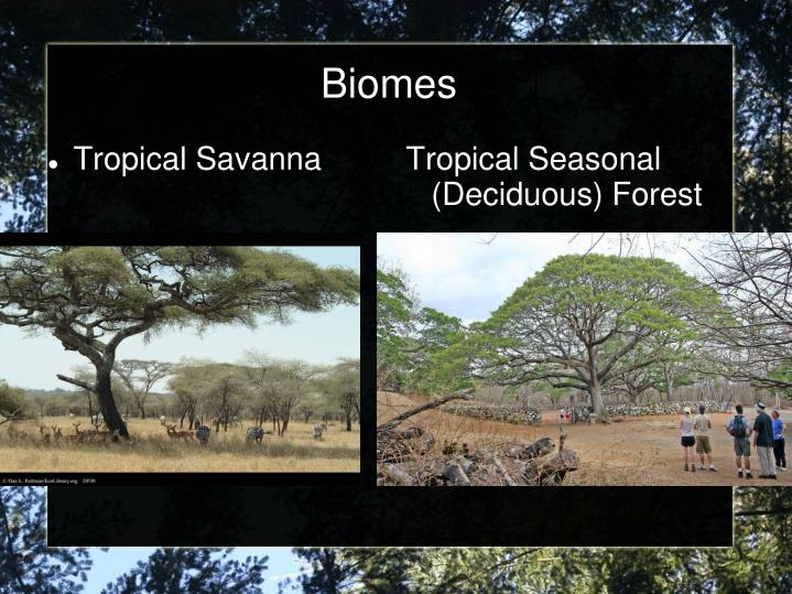 Tropical Seasonal (Deciduous) Forest