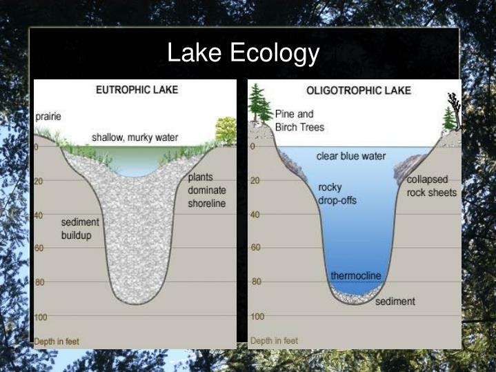 Lake Ecology
