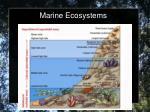marine ecosystems1