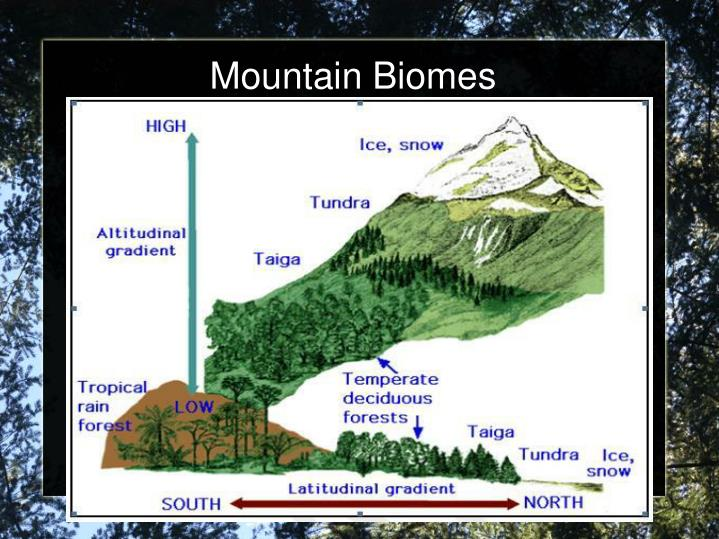 Mountain Biomes