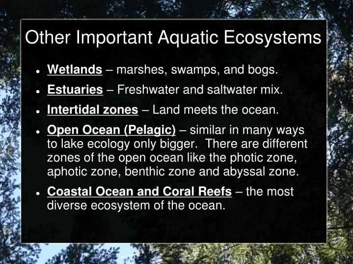 Other Important Aquatic Ecosystems