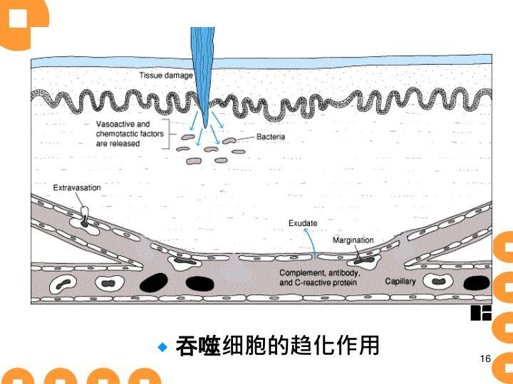 吞噬细胞的趋化作用
