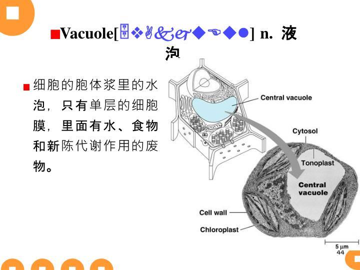 Vacuole[