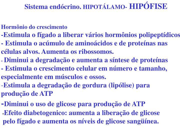 Sistema endócrino.