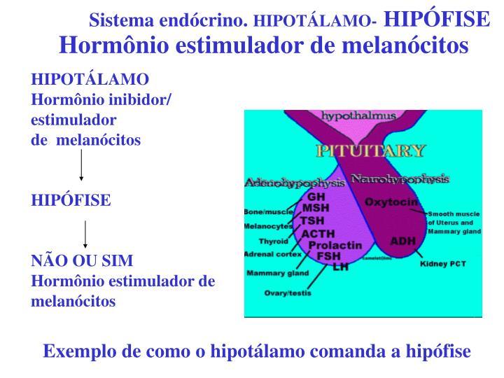 Hormônio estimulador de melanócitos