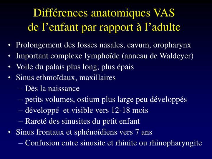Différences anatomiques VAS