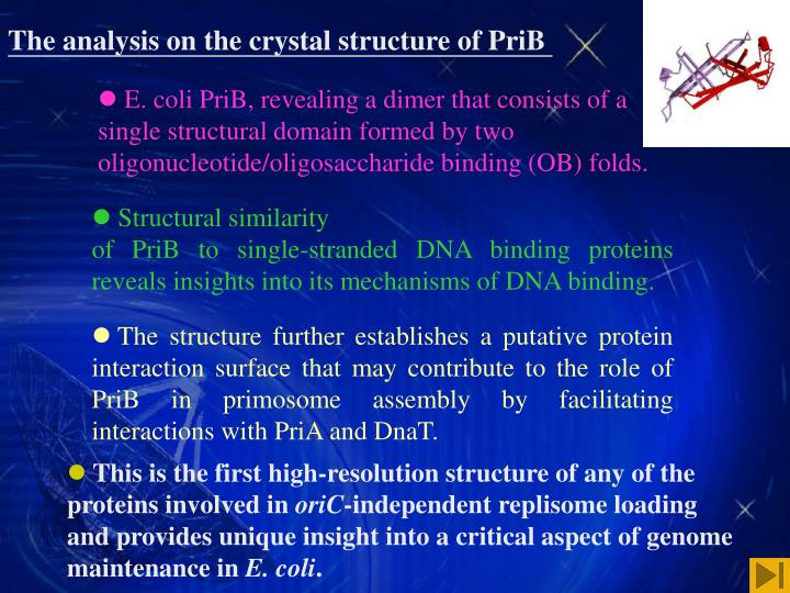 The analysis on the crystal structure of PriB