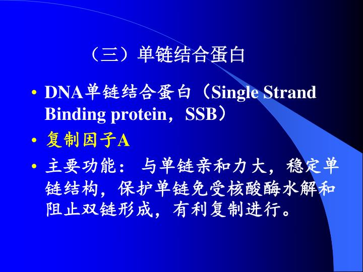 (三)单链结合蛋白