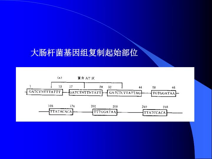 大肠杆菌基因组复制起始部位
