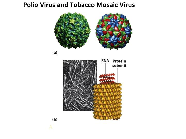 Polio Virus and Tobacco Mosaic Virus