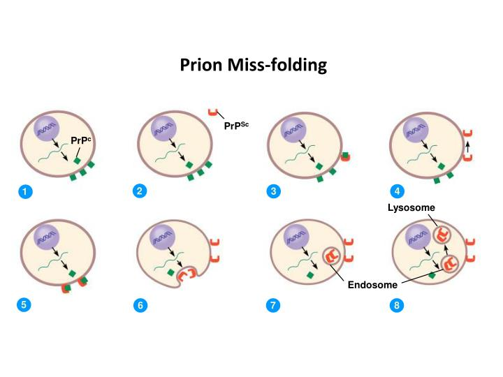 Prion Miss-folding