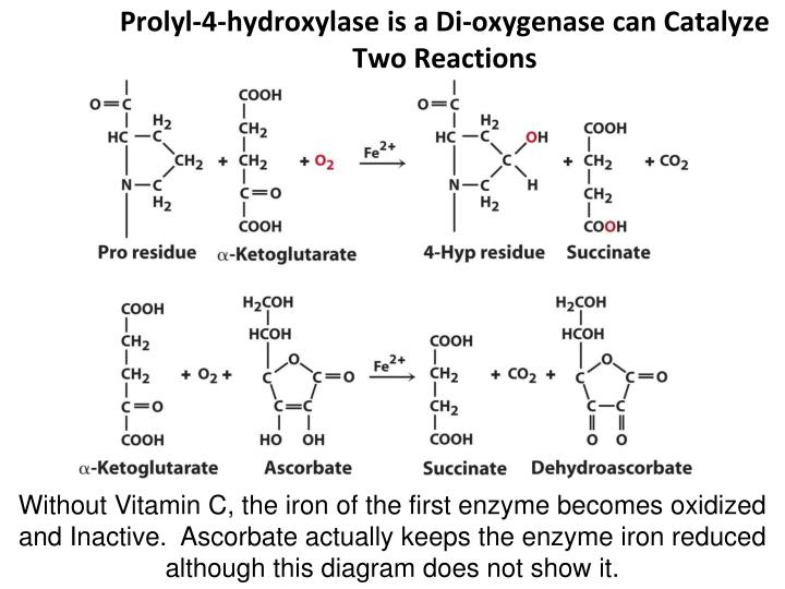 Prolyl-4-hydroxylase is a Di-oxygenase can Catalyze Two Reactions
