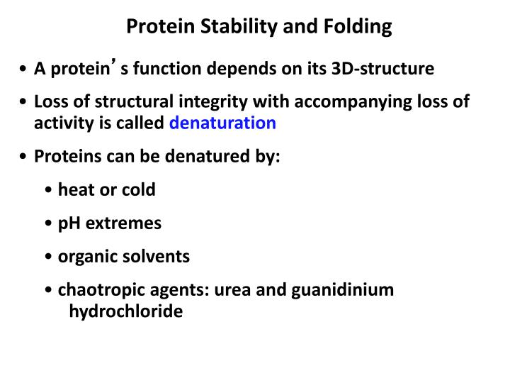 Protein Stability and Folding