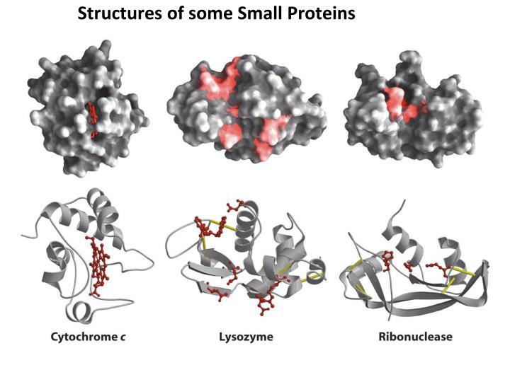 Structures of some Small Proteins