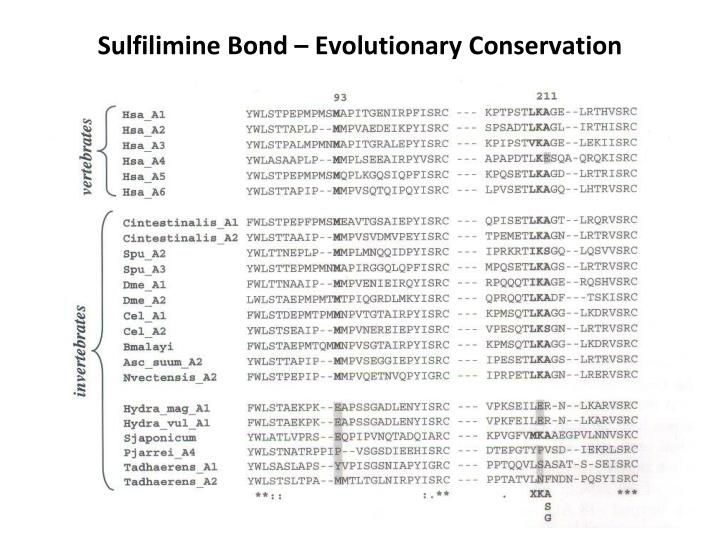 Sulfilimine Bond – Evolutionary Conservation