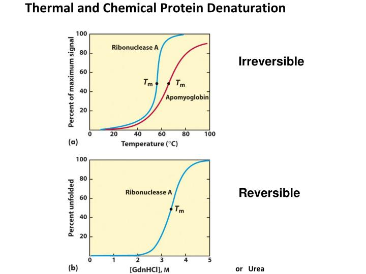 Thermal and Chemical Protein Denaturation