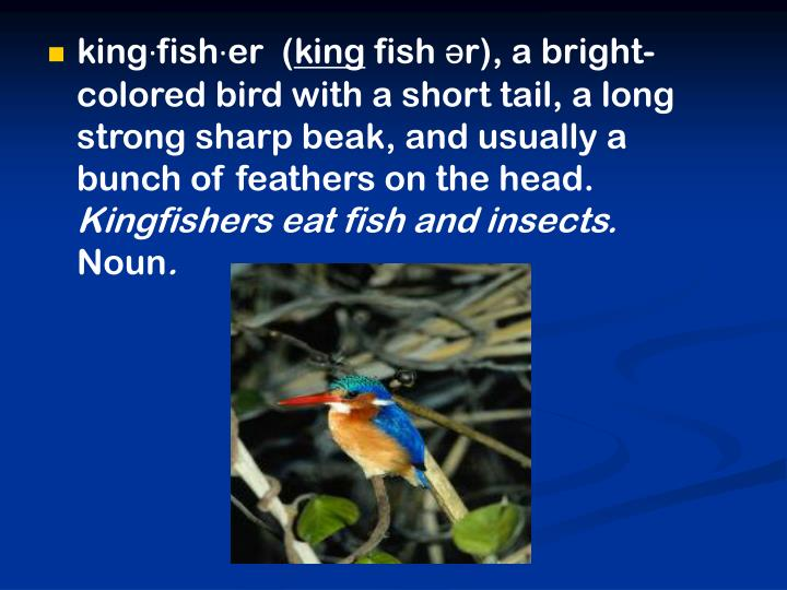 king·fish·er  (
