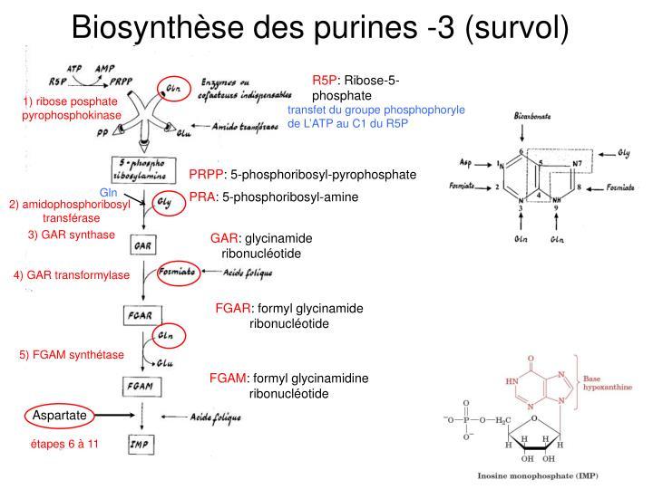 Biosynthèse des purines -3 (survol)