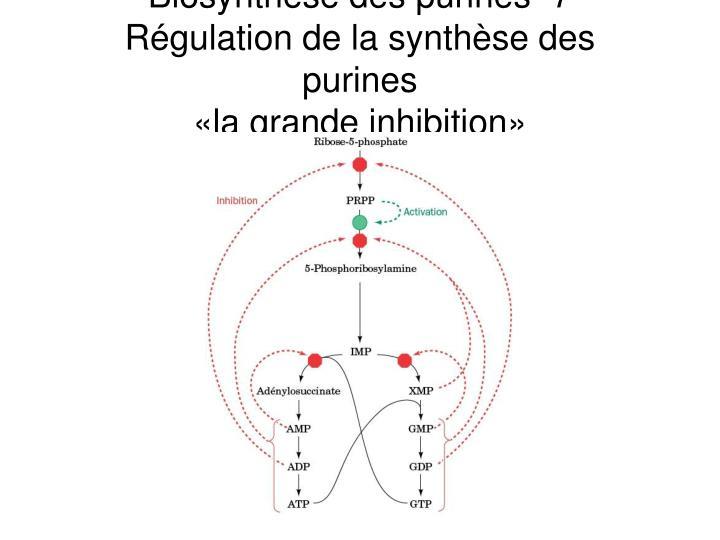 Biosynthèse des purines -7