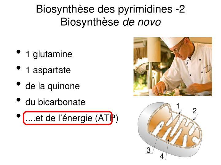 Biosynthèse des pyrimidines -2