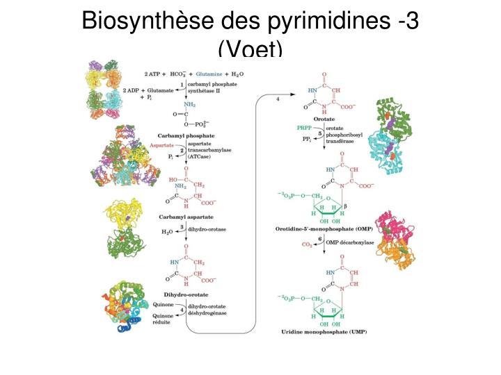 Biosynthèse des pyrimidines -3 (Voet)