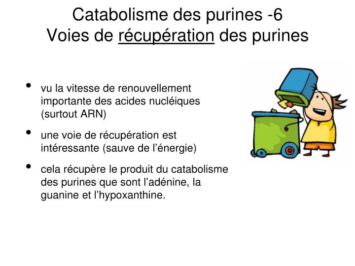 Catabolisme des purines -6