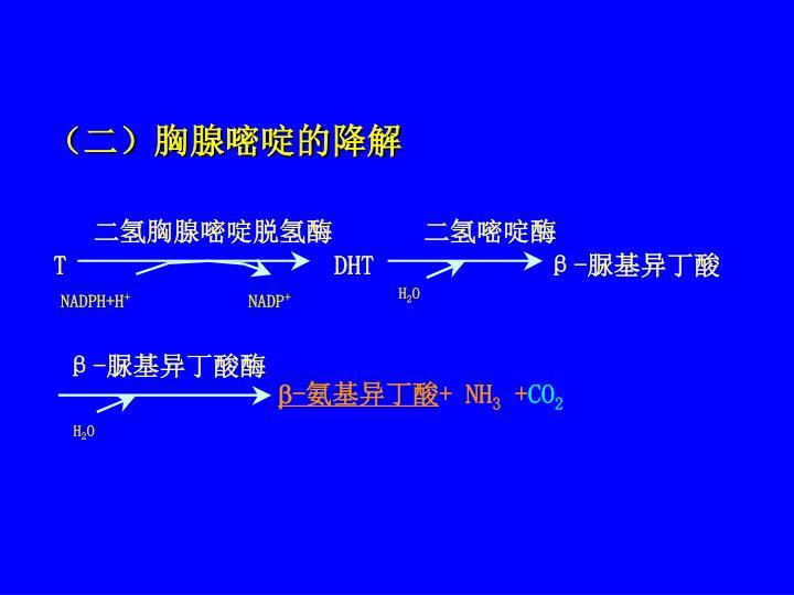 (二)胸腺嘧啶的降解