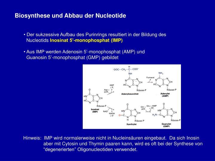 Biosynthese und Abbau der Nucleotide