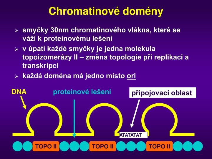Chromatinové domény
