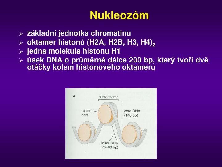 Nukleozóm